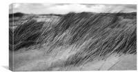 Windswept Marram Grass, Canvas Print