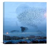 Murmuration of Starlings, Canvas Print