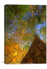 Colours of Autumn, Canvas Print