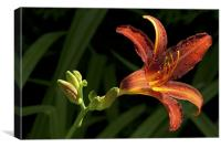 Tiger Lily Passion, Canvas Print