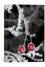 Christmas Frost, Canvas Print