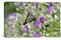 Swallowtail Butterfly Resting, Canvas Print
