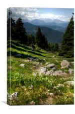 Greek Alpine  Meadow, Canvas Print