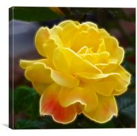 Yellow Rose hint of pink fractals flood, Canvas Print