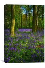 Chalet Wood Wanstead Park Bluebells, Canvas Print