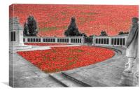 Chatham memorial Poppies , Canvas Print