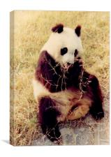Chinese Giant Panda, Canvas Print