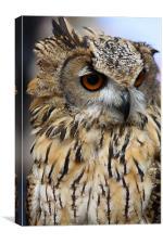 Eagle Owl, Canvas Print