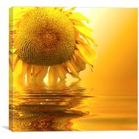 Sunflower sunset, Canvas Print