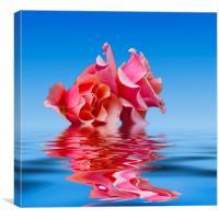 Pink Rose sea plale blue, Canvas Print