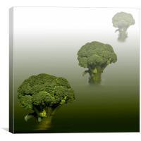 Broccoli Green Veg, Canvas Print
