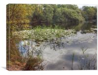 Epping Forest reflections, Canvas Print