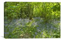 Bluebells Belhus Woods, Canvas Print