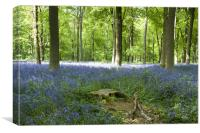 Bluebells at Westwoods, Canvas Print