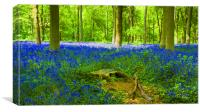 Bluebells HDR, Canvas Print