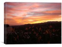 Californian Sunset , Canvas Print