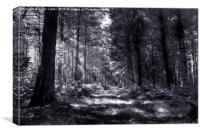 Bowmont Forest, in Black and White, Canvas Print