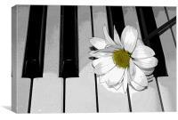 Daisy on a Piano 2, Canvas Print