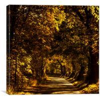 Autumnal Lane, Scottish Borders, Canvas Print
