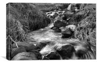 Stream in Black and White, Canvas Print