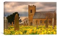 Carham Kirk and Daffodils, Canvas Print