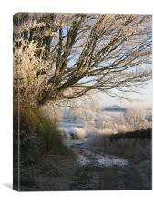 Frosty Tree , Canvas Print