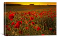 Sunset over poppies in Sussex