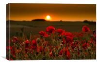 Sunset over poppies in Sussex, Canvas Print