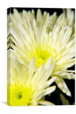 yellow flower, Canvas Print