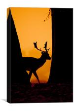 Deer Silouette, Canvas Print