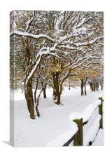 Snowey Branches, Canvas Print