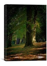 Toned Buxton Trees, Canvas Print