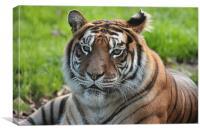 Tiger Close up , Canvas Print