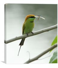 Green Bee-eater with prey