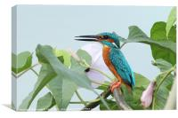 Common Kingfisher, Canvas Print