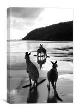 Kangaroos on the Beach , Canvas Print