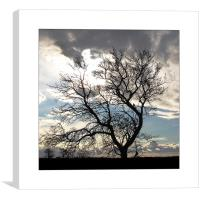 Tree Silhouette , Canvas Print