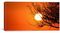 sunset series- winter tree silhouette, Canvas Print