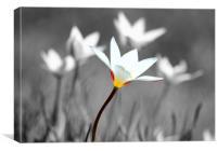 white wild autumn flower