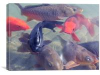 fishes, Canvas Print