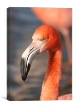 Flamingo , Canvas Print