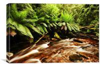 Tasmanian Rain Forest, Canvas Print