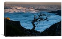 Dead Tree on Pico Ruivo, Canvas Print