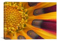 Deep into a flower , Canvas Print
