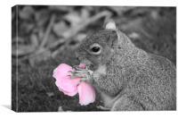 Squirrel eats Flower , Canvas Print