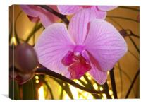 Pink Orchid , Canvas Print