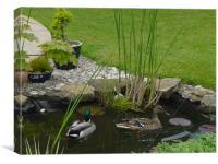 ducks in garden pond, Canvas Print