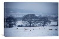 Sheep in The Snow, Canvas Print