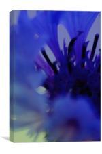 Blue dream, Canvas Print