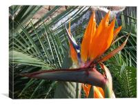 Bird of Paradise Crop, Canvas Print